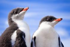 Welt-Pinguin-Tag 2019