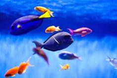 Tag der Fische 2019