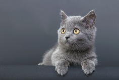 Nationaler Beantworte-die-Fragen-Deiner-Katze-Tag 2021