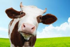 Ehrentag der Kuh 2019