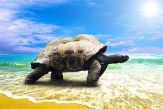 Welt-Schildkröten-Tag 2018