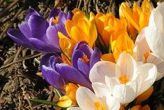 Meteorologischer Frühlingsbeginn 2016