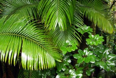 Tag der Tropenwälder 2021
